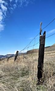 Burned fence post